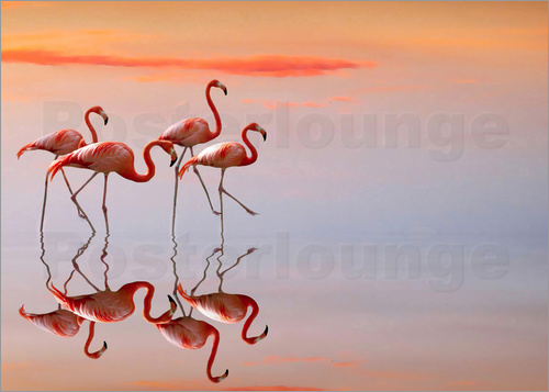 Poster Flamingos in the mirror