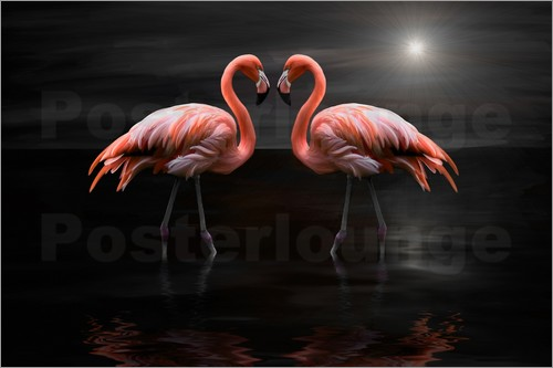 Poster Flamingos at night