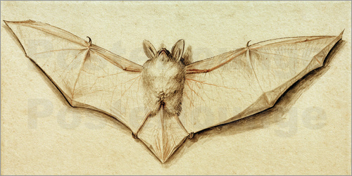 Poster Bat with spread wings