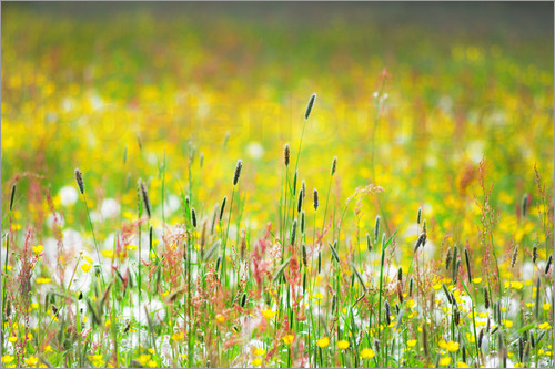 Poster Spring Meadow