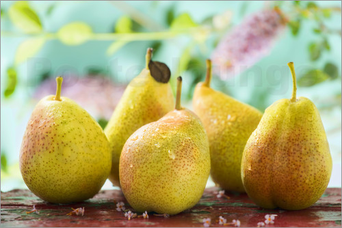 Poster Five pears