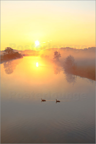 Poster Geese in Sunrise