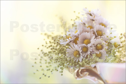 Poster Daisies in LOVE