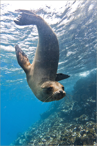 Michael Nolan - Galapagos sea lion