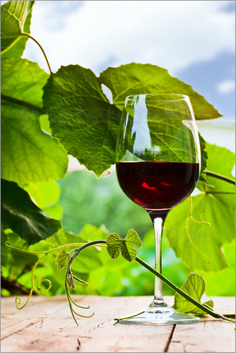 Poster glass with red wine in vineyard
