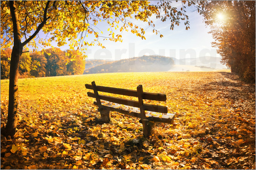 Poster Golden autumn forest with sunlight