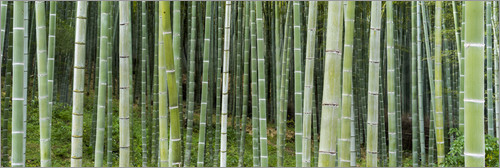 eyetronic - Green bamboo forest in Kyoto, Japan