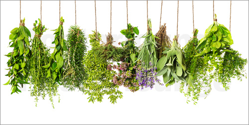 Poster hanging herbs