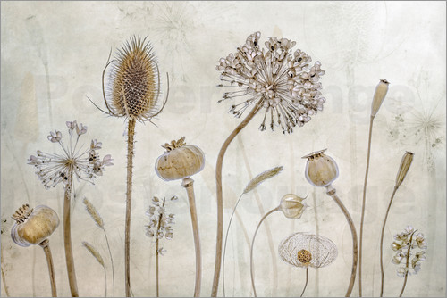 Mandy Disher - Autumn