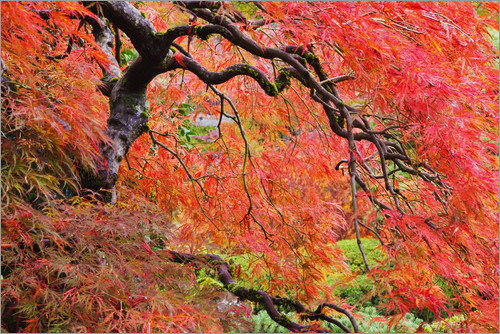 Craig Tuttle - Autumn Colours, Japanese Gardens