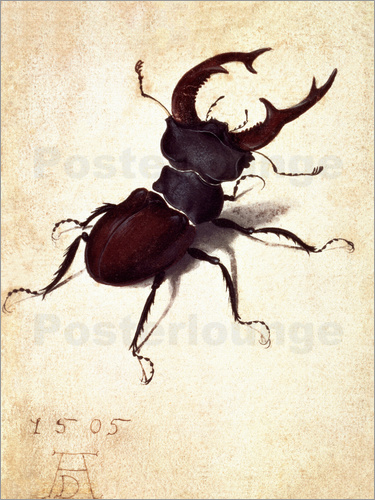 Poster Stag beetle