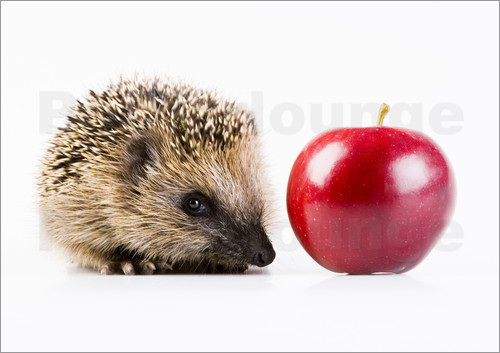 Poster Hedgehog and apple