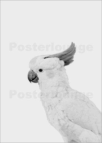 Poster Cockatoo