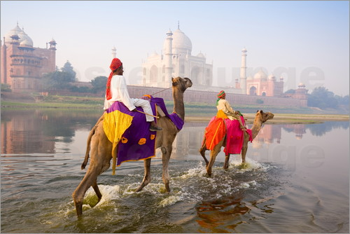 Poster Camel riders at the Taj Mahal