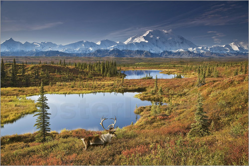 John Delapp - Caribou and ponds near Mt. McKinley