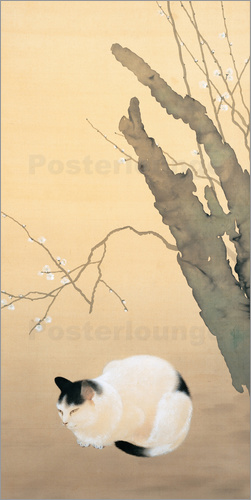 Poster Cat and plum blossoms