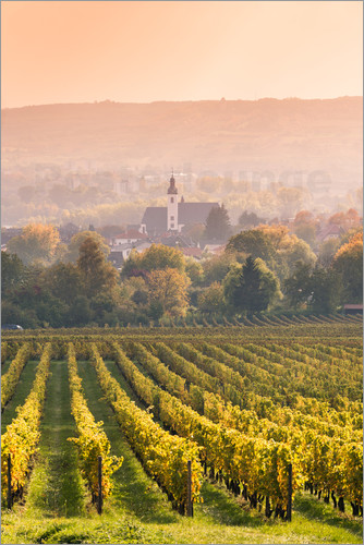 Poster Church and vineyards in the Rhine valley