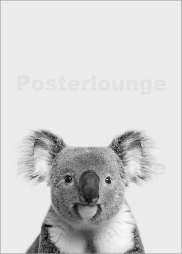 posters affiches de koala posterlounge. Black Bedroom Furniture Sets. Home Design Ideas