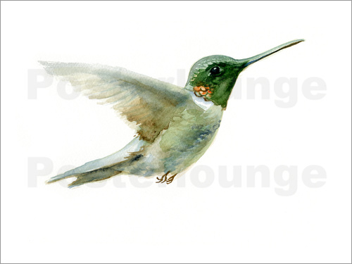 Verbrugge Watercolor - Hummingbird