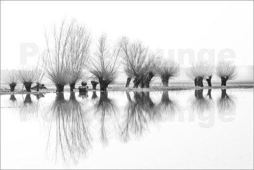 Ingo Gerlach - Willow trees in the mirror image of the flood