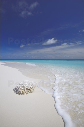 Sakis Papadopoulos - Coral on white sand beach