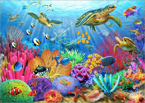 Adrian Chesterman - Turtle Coral Reef