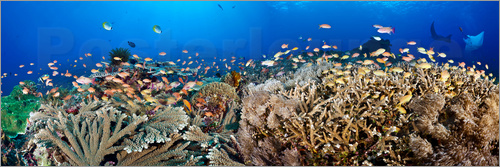 Poster Coral reef off Bali