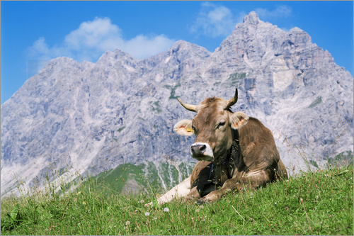 Poster Cow on a mountain meadow