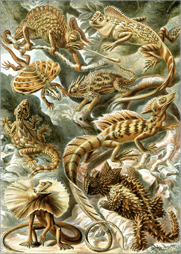 Ernst Haeckel - Lacertilia