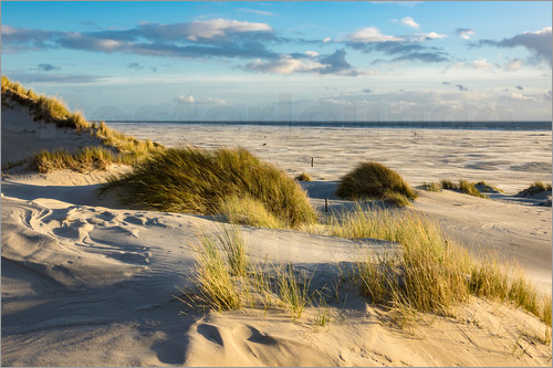 Poster Landscape with dunes on the North Sea island Amrum