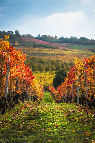 Poster Langhe in Autumn, Italy