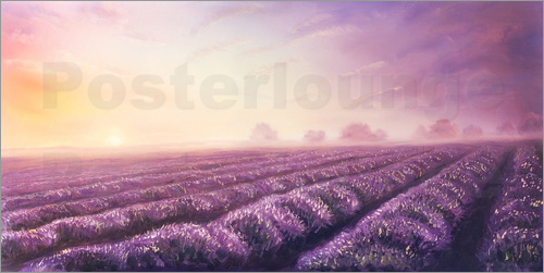 Poster Lavender dream