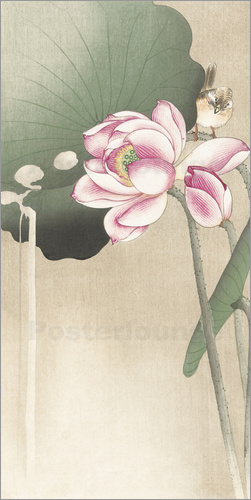 Ohara Koson - Dragonfly on a water lily