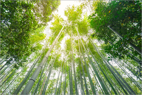 Light falls through the bamboo forest