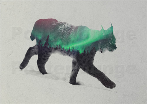 Poster Lynx in the aurora borealis
