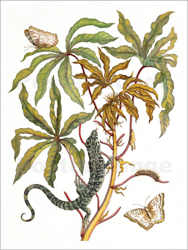 Poster cassava with crocodile and butterfly metamorphosis