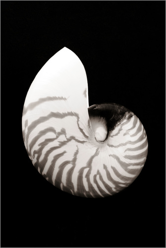 Bill Brennan - Chambered Nautilus