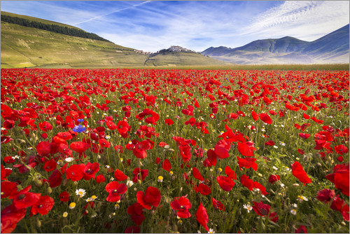 Frank Fischbach - Poppies at Piano Grande, Umbrien, Italy
