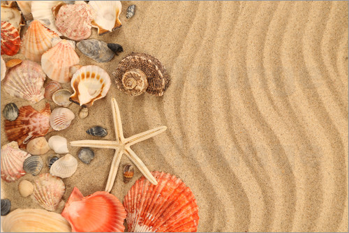 Poster Shells and starfish on sand