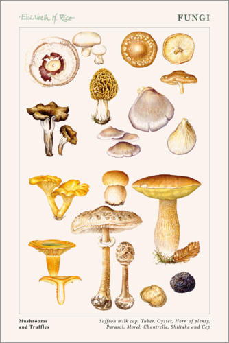 Elizabeth Rice - Mushrooms and Truffles