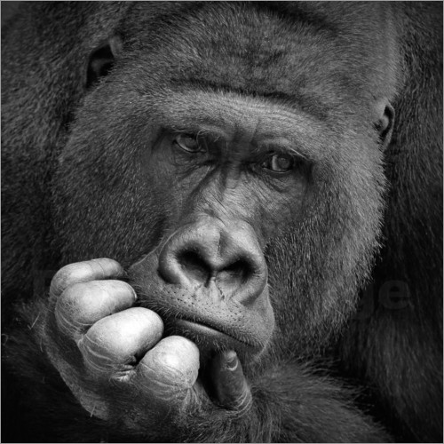 Poster thoughtful gorilla