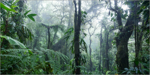Matteo Colombo - Misty Rainforest, Costa Rica