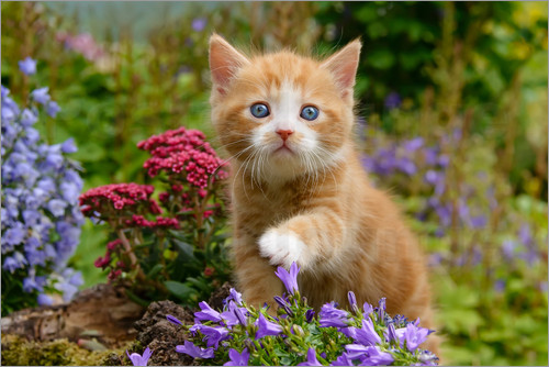 Katho Menden - Cute ginger kitten in a flowery garden