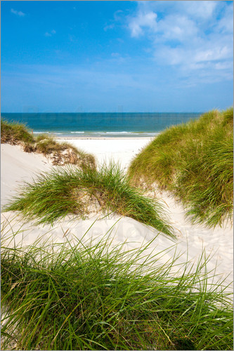 Poster Seascape with dunes and beach grass