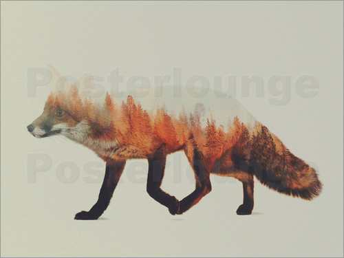 Poster Norwegian Woods The Fox