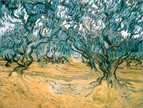 Poster Olive Trees