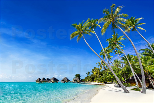 Jan Christopher Becke - Palm beach and ocean on a deserted island in the tropics