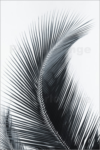 larry dale gordon palm fronds poster posterlounge