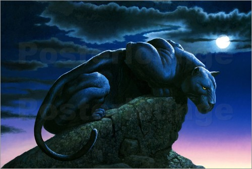 Poster Panther on rock