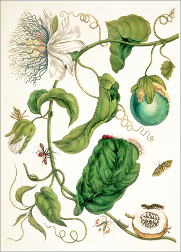 Poster Passion flower and insects